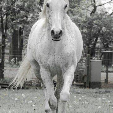 8 Levenslessen die ik leerde van mijn paard